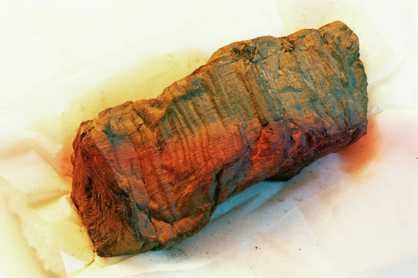 Pasquale Photograph - Ancient Papyrus Scroll by Pasquale Sorrentino/science Photo Library