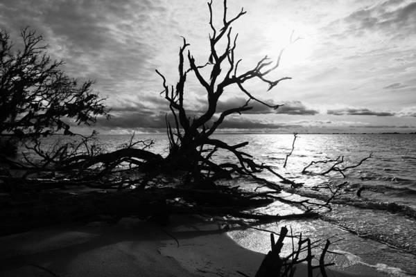 Jekyll Island Photograph - Ancient Sacrifice  by Betsy Knapp