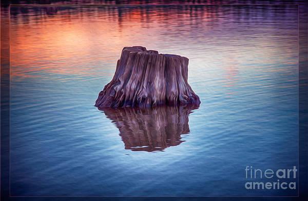 Photograph - Ancient Tree Reflecting The Sunrise by Omaste Witkowski