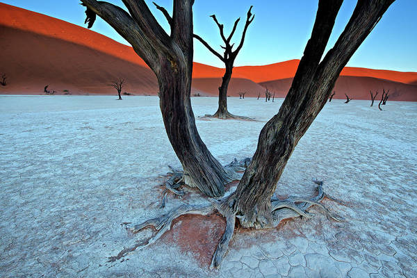 Dry Photograph - Ancient Trees In The Vlei by Trevor Cole