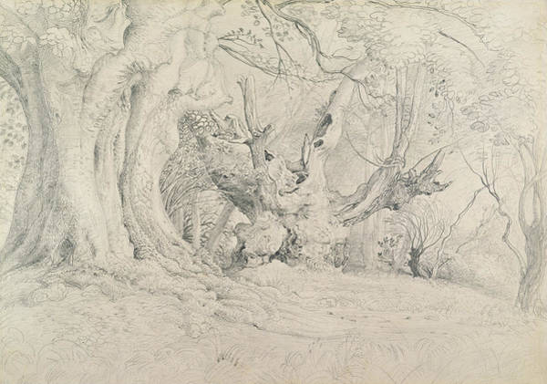 Ancient Woodland Painting - Ancient Trees Lullingstone Park by Samuel Palmer