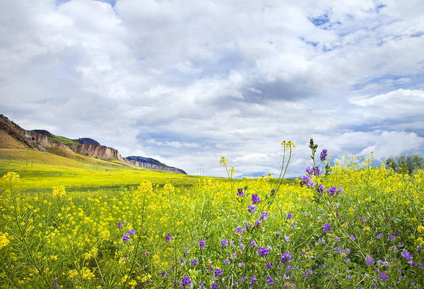 Wall Art - Photograph - And A Heaven In A Wild Flower by Theresa Tahara