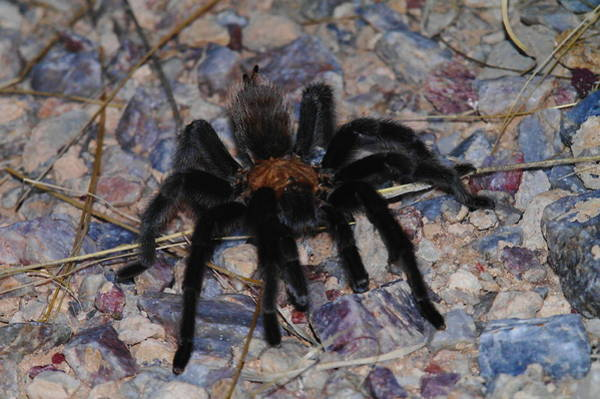 Spider Rock Photograph - And Along Came A Little Spider .  by Jeff Swan