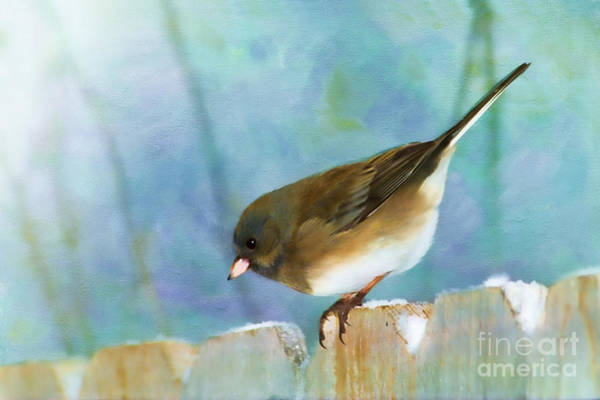 Dark Eyed Junco Photograph - And Down I Go by Betty LaRue