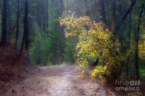 Photograph - And In The Dark Forest There Is Light by Tara Turner