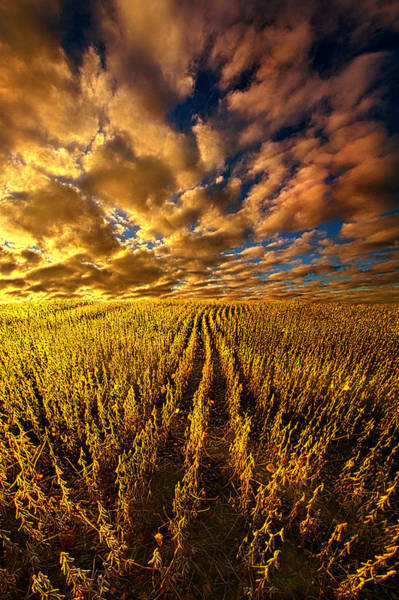 Vertical Line Wall Art - Photograph - And So We Dream by Phil Koch