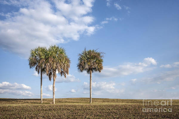 South Florida Wall Art - Photograph - And Then There Were Three... by Evelina Kremsdorf