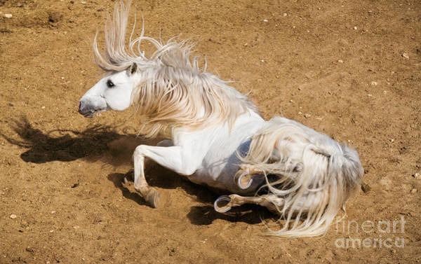 Andalusian Stallion Wall Art - Photograph - Andalusian Horse by Gabriele Boiselle