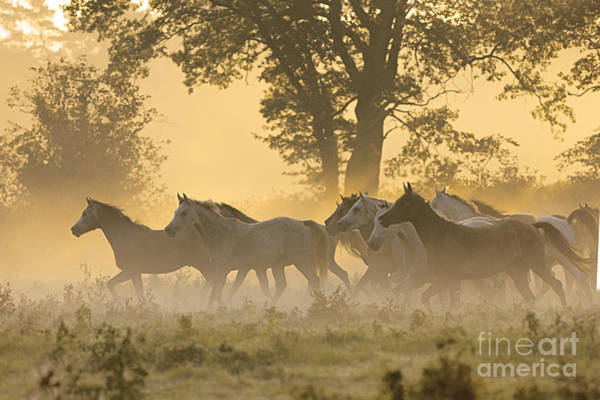 Mare And Foal Photograph - Andalusian Horses by Gabriele Boiselle