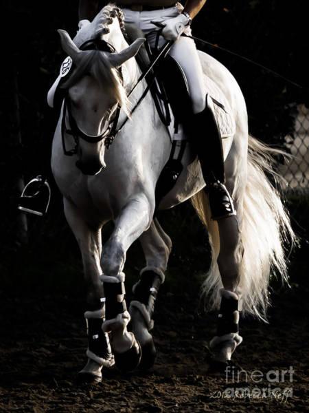 Andalusian Stallion Wall Art - Photograph - Andalusian Stallion by Rebecca Neff