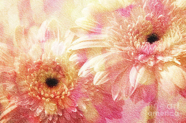 Photograph - Andee Design Gerber Daisies 1 by Andee Design