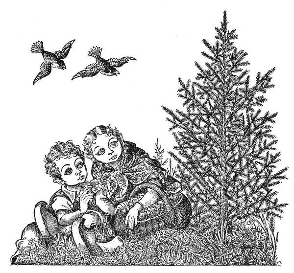 Evergreen Trees Drawing - Andersen The Fir Tree by Granger