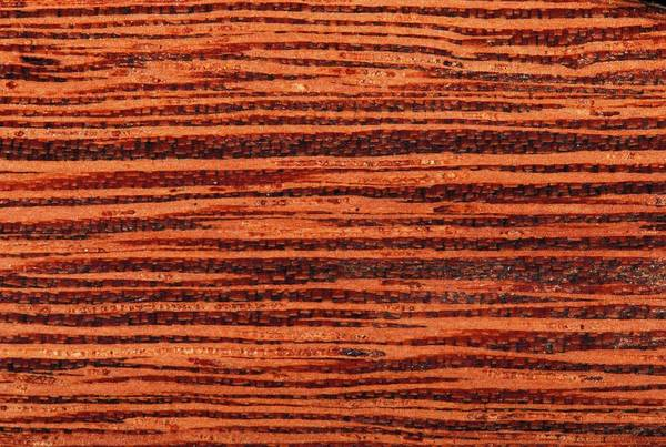 Wall Art - Photograph - Andira Coriacea Wood by Pascal Goetgheluck/science Photo Library