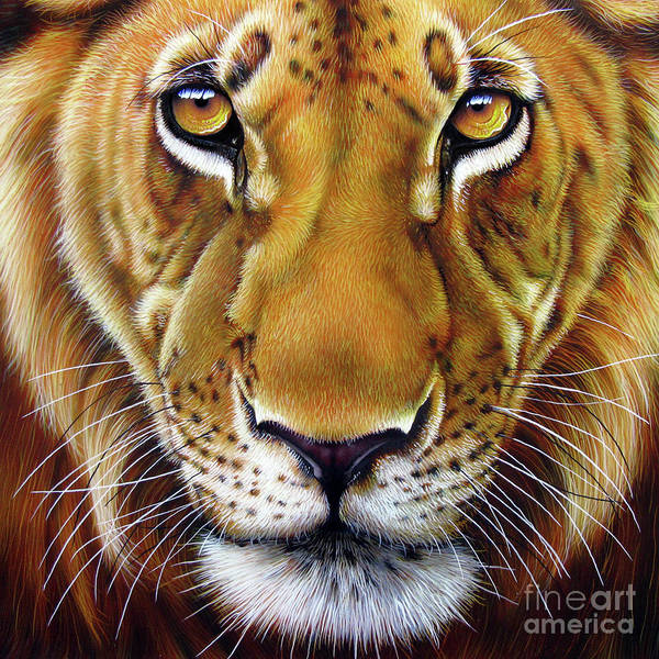 Big Cat Wall Art - Painting - Andre Lion by Jurek Zamoyski