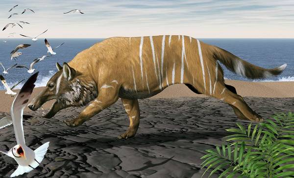 Ungulate Wall Art - Photograph - Andrewsarchus by Jaime Chirinos/science Photo Library
