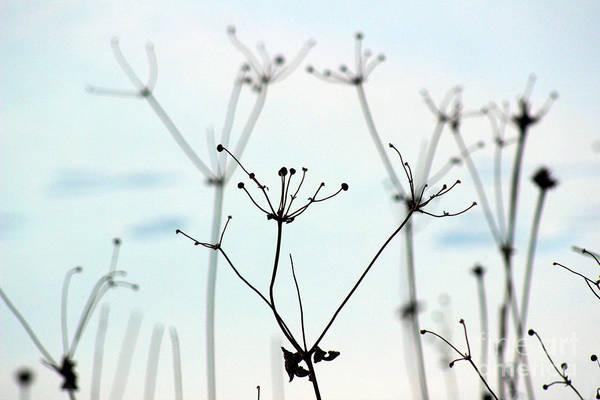 Photograph - Anemone In Winter by Karen Adams
