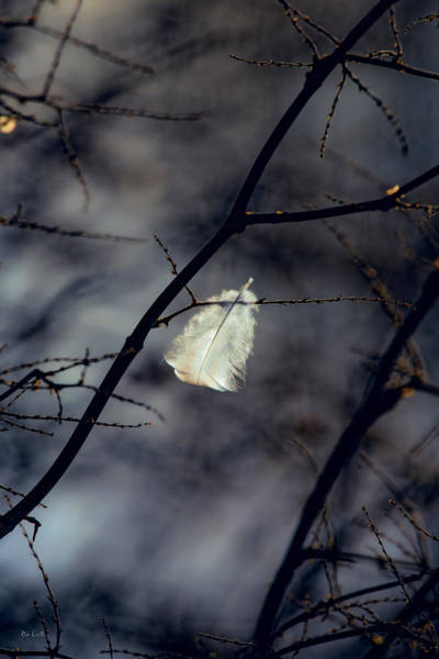 Uplift Photograph - Angel Feather by Bob Orsillo