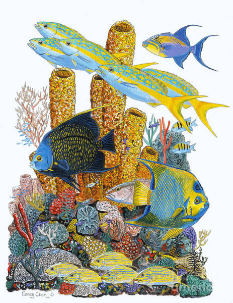 Scuba Diving Painting - Angel Fish Reef by Carey Chen