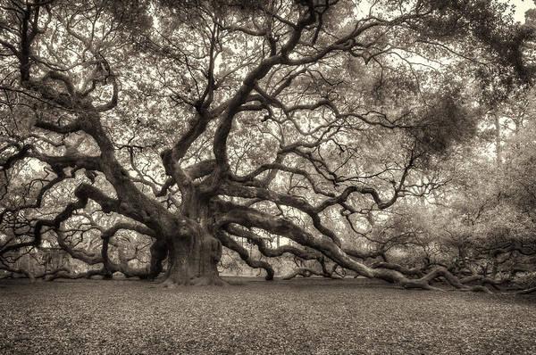Photograph - Angel Oak - Sepia by Joye Ardyn Durham