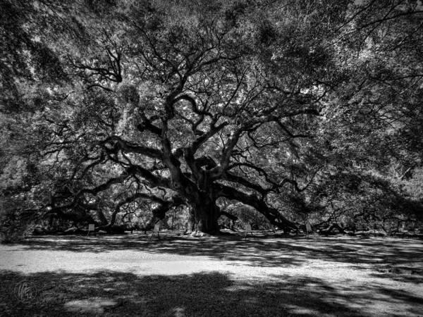 Photograph - Angel Oak 001 Bw by Lance Vaughn