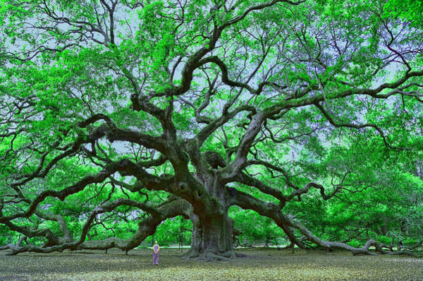 Coast Live Oak Photograph - Angel Oak by Allen Beatty