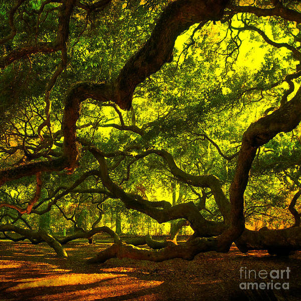 Photograph - Angel Oak Limbs Crop 40 by Susanne Van Hulst