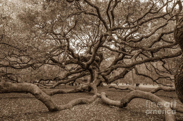 Photograph - Angel Oak Tree In Sepia by Dale Powell