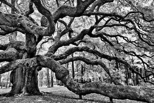 Angel Oak Tree Ir Hdr Art Print