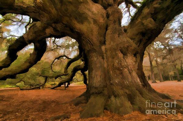 Angel Oak Tree Art Print
