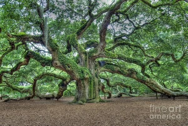 Kiawah Island Photograph - Angel Oak by Willie Harper