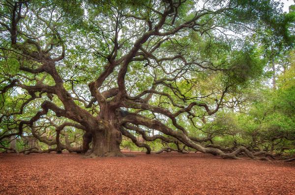 Photograph - Angel Tree by Joye Ardyn Durham