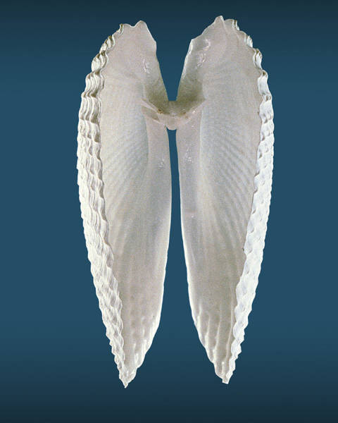 Wall Art - Photograph - Angel Wings Color by William A Conklin