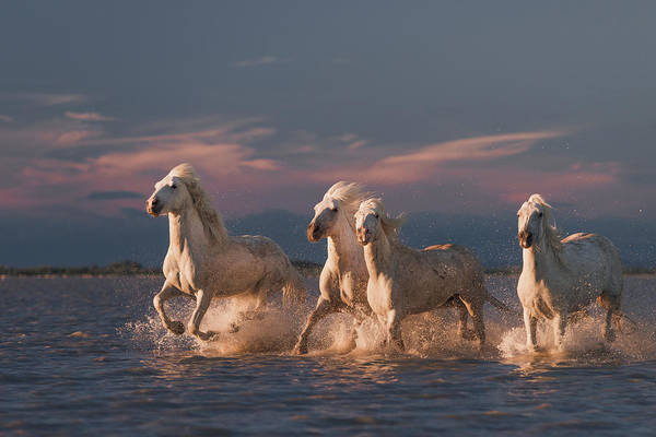 Strong Photograph - Angels Of Camargue by Rostovskiy Anton