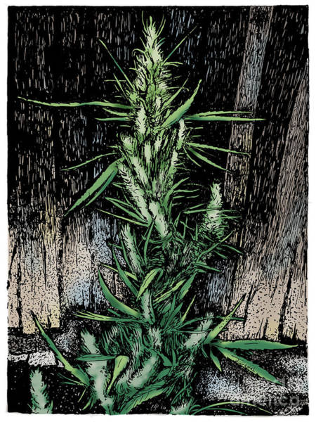 Weeds Drawing - Angular Green by Joseph Juvenal