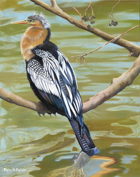 Wall Art - Painting - Anhinga Perched by Phyllis Beiser