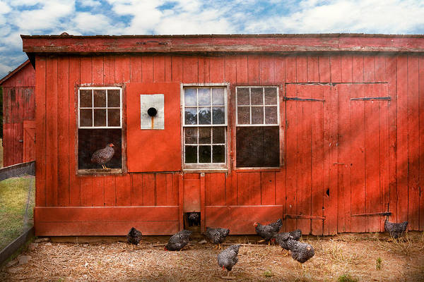 Photograph - Animal - Bird - Bird Watching by Mike Savad