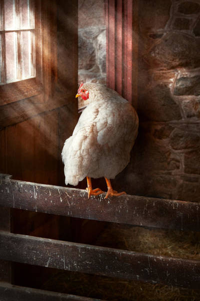 Photograph - Animal - Chicken - Lost In Thought by Mike Savad