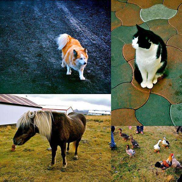 Art Print featuring the photograph Animal Farm by HweeYen Ong