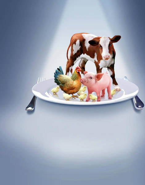 Baby Cow Photograph - Animal Farming by Smetek/science Photo Library