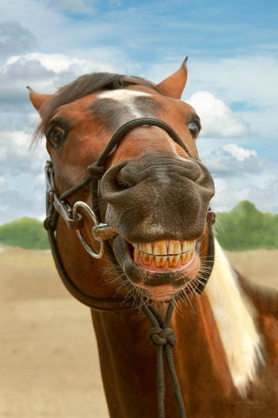 Wall Art - Photograph - Animal - Horse - I Finally Got My Braces Off by Mike Savad