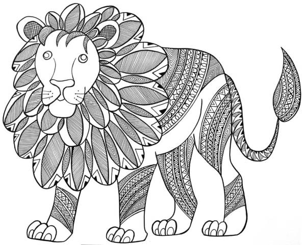 Wall Art - Drawing - Animal Lion by MGL Meiklejohn Graphics Licensing