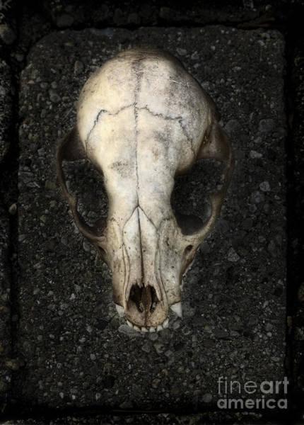 Wall Art - Photograph - Animal Skull by Jill Battaglia