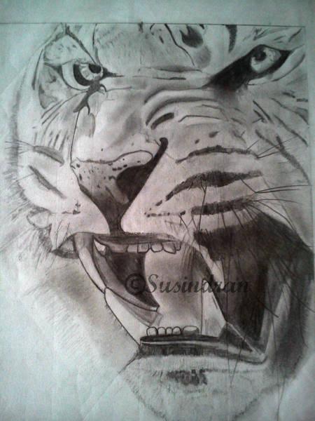 Bengal Tiger Drawing - Animal by Susindran Akash