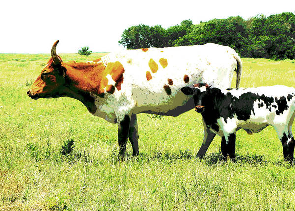 Posterize Photograph - animals - cows- Cow and Calf  by Ann Powell