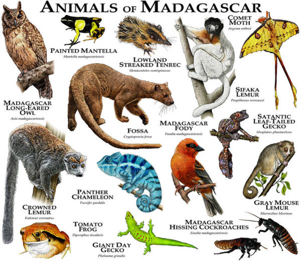 Wall Art - Photograph - Animals Of Madagascar by Roger Hall