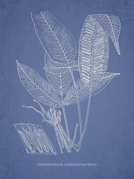 Ferns Digital Art - Anisogonium Lineolatum by Aged Pixel