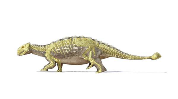 Prehistoric Era Wall Art - Digital Art - Ankylosaur Dinosaur Skeleton, Artwork by Leonello Calvetti