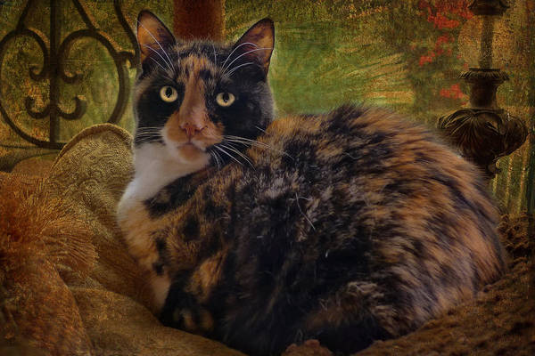 Feline Photograph - Annabelle by Larry Marshall