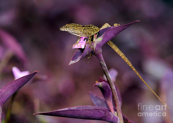 Photograph - Anole Lizard In A Purple Garden by Sabrina L Ryan