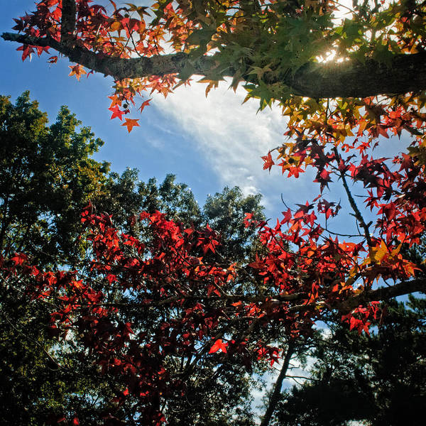 Photograph - Another First Colors Of Fall  by George Taylor